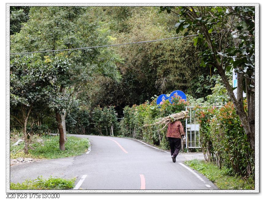 關山自行車道-撿拾木柴的老人