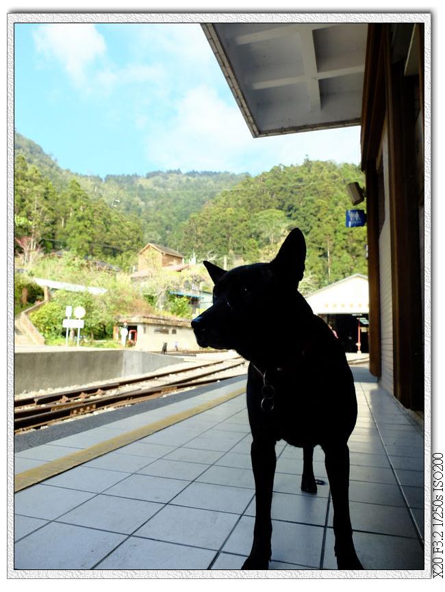車站小小黑