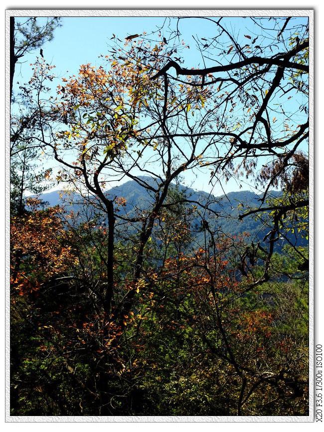 山上的紅葉
