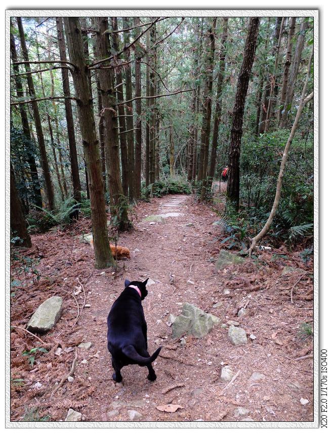 一家三狗來爬山..阿肥你也要爬?