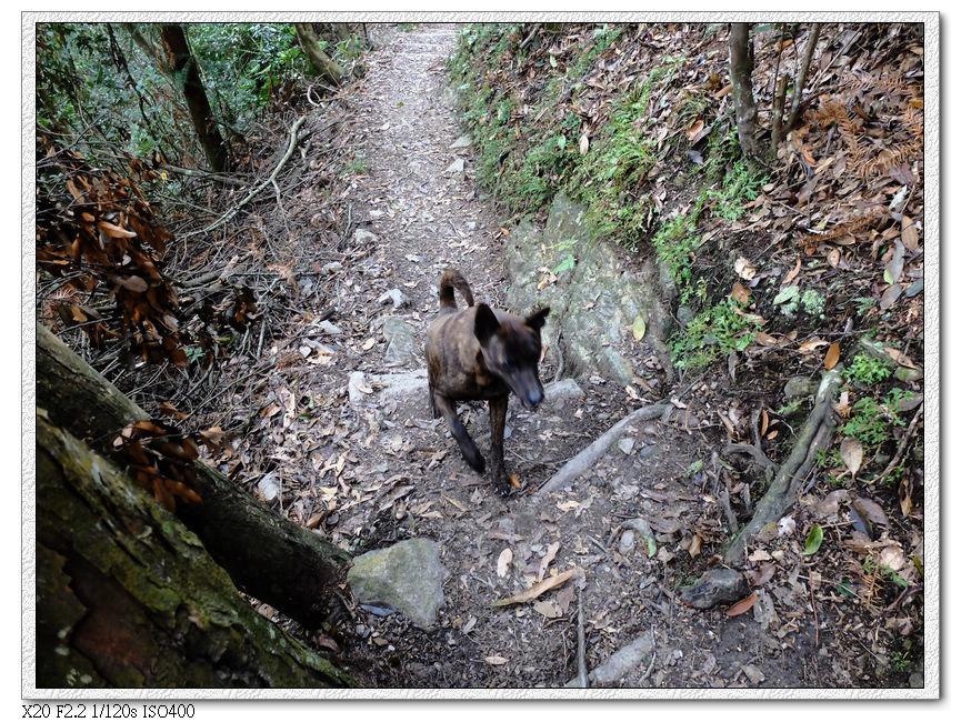 到平緩處看見有人帶狗狗已經從主峰下來了