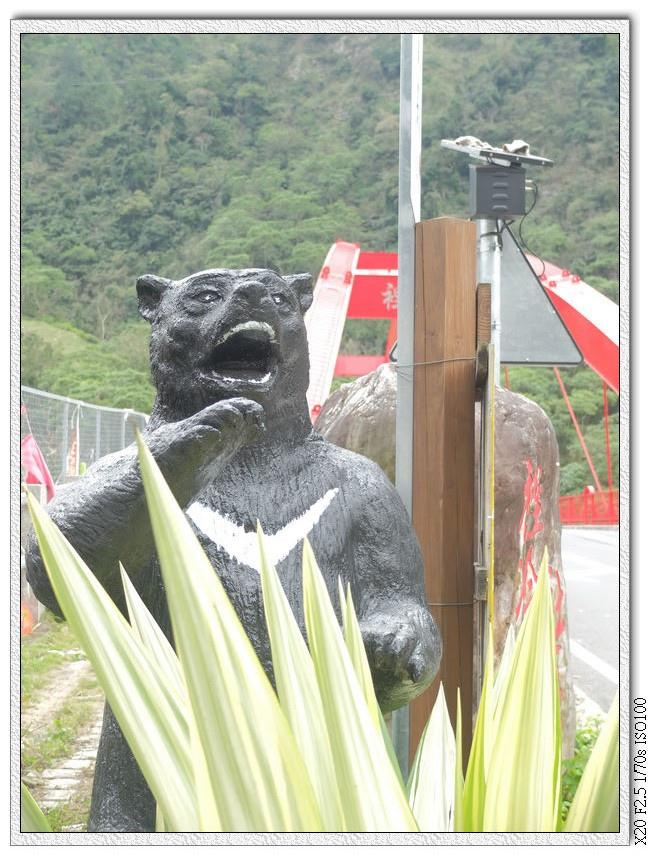 路口的黑熊