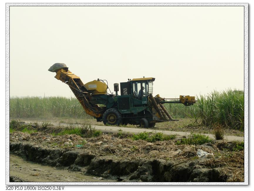 甘蔗收工中