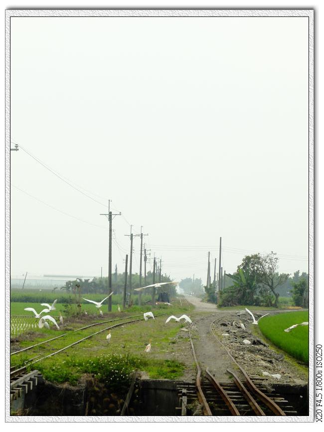 4/01 鐵橋上的白鷺鷥