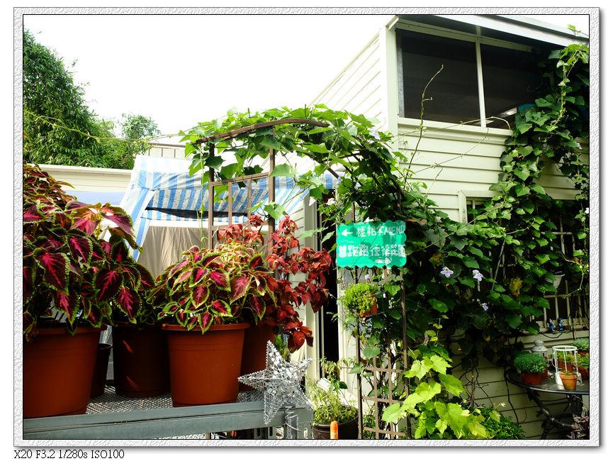 綠萼春風-庭院