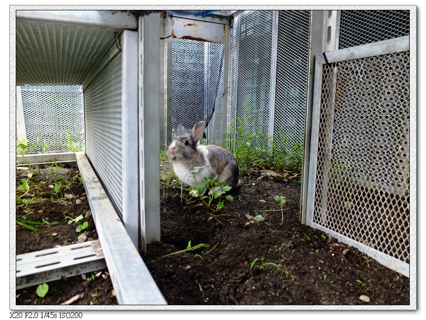 綠萼春風-蹓兔區