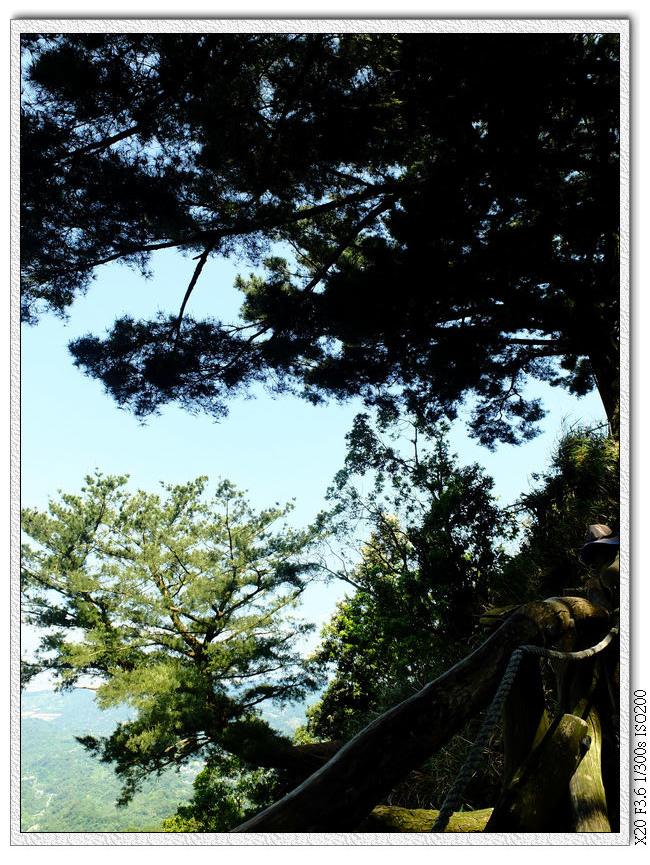 在一段陡上,盡頭看到大松樹