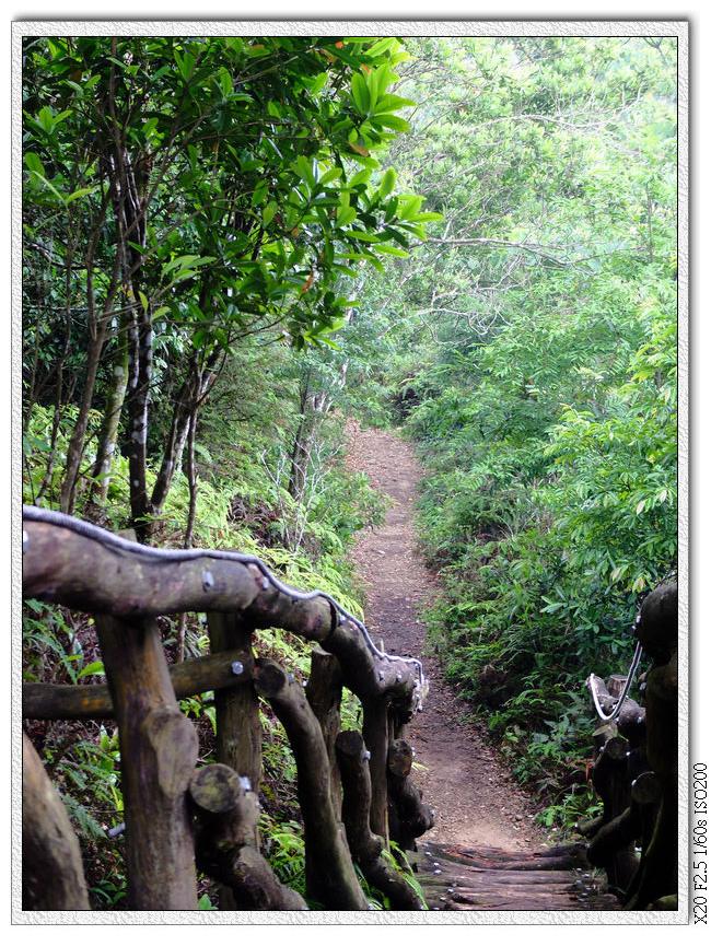 一路都是圓木階梯跟土路交會