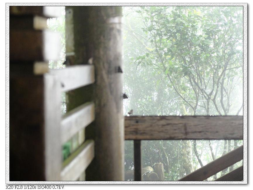 今天這種小蝴蝶都不飛,亭在涼亭的木頭上