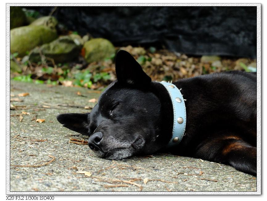路上的狗都在睡