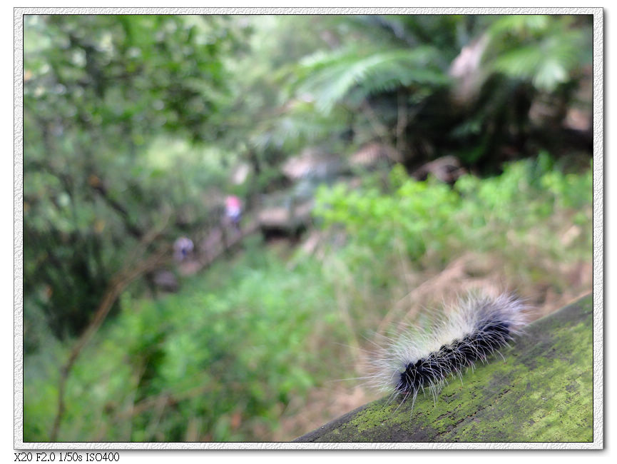 毛毛蟲季到了