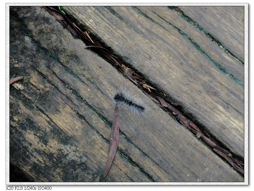 棧道上也是毛毛蟲