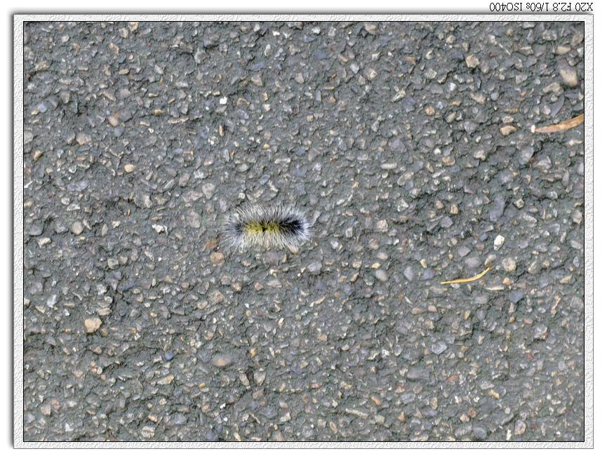柏油路也是毛毛蟲