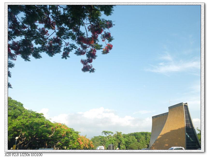 教堂大草地前鳳凰木