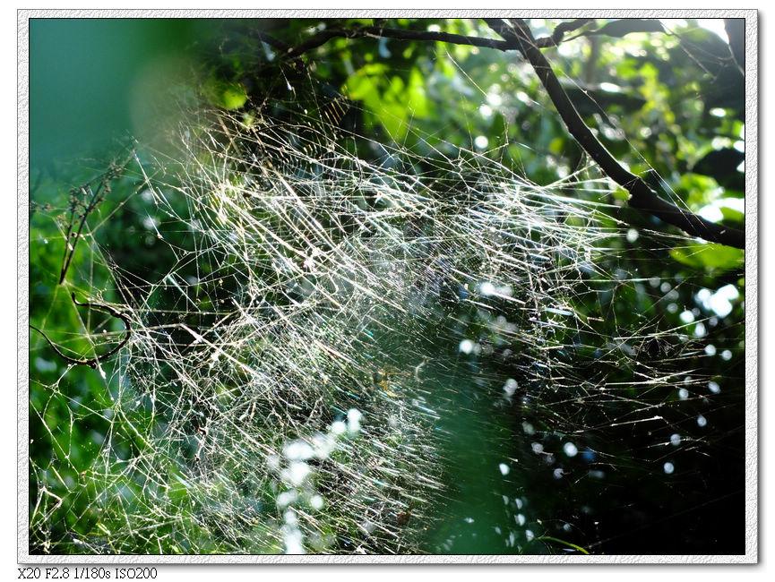 路邊的蜘蛛網