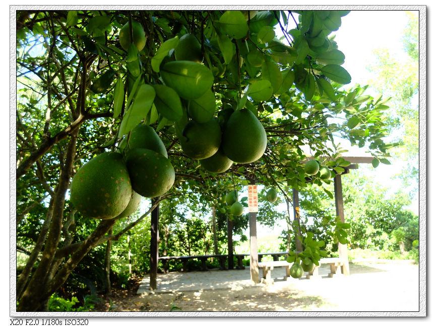 柚子的季節