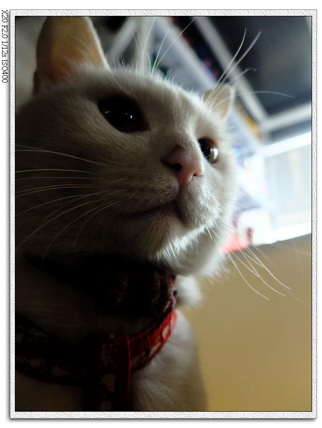 客棧的小貓