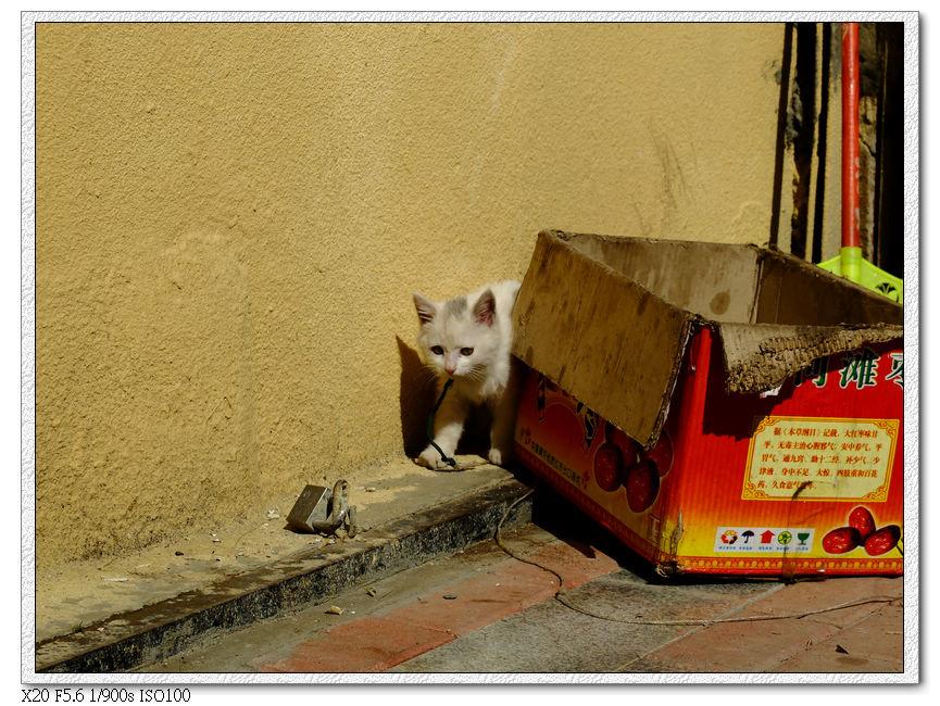 一間藏餐店養的小貓,就只給一個紙箱用牽繩綁在外面,這天氣這養法不知道能活多久