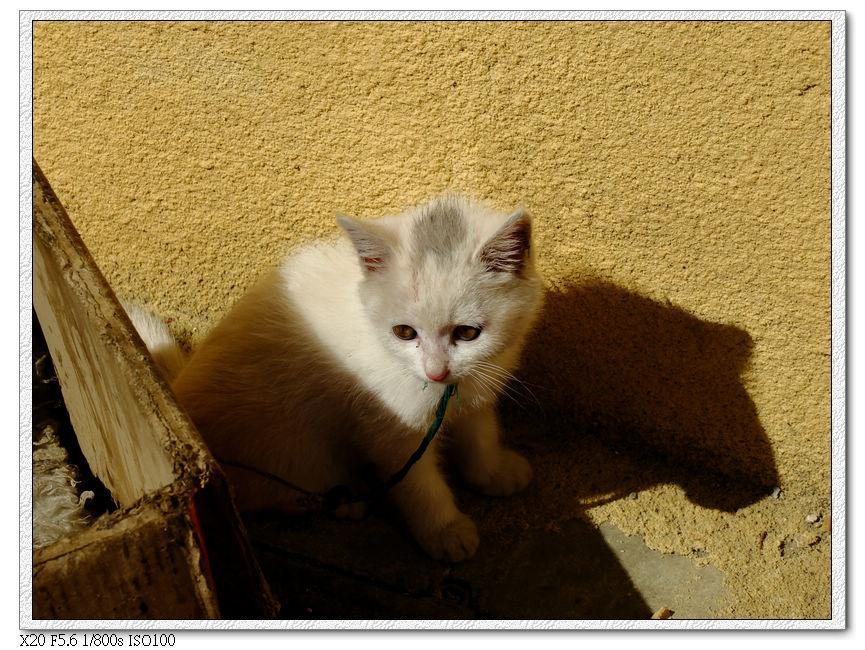 一間藏餐店養的小貓