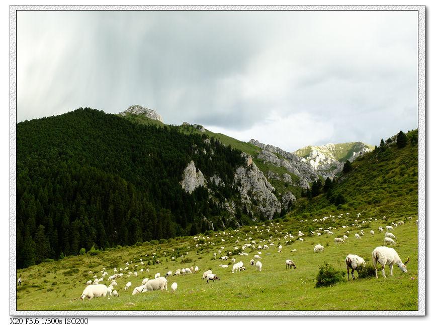 四川郎木寺後方牧羊