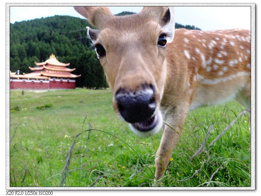 郎木寺暴力小鹿