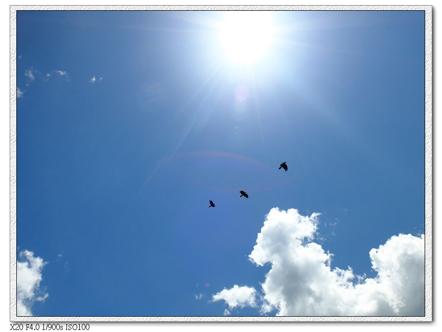 三隻烏鴉...