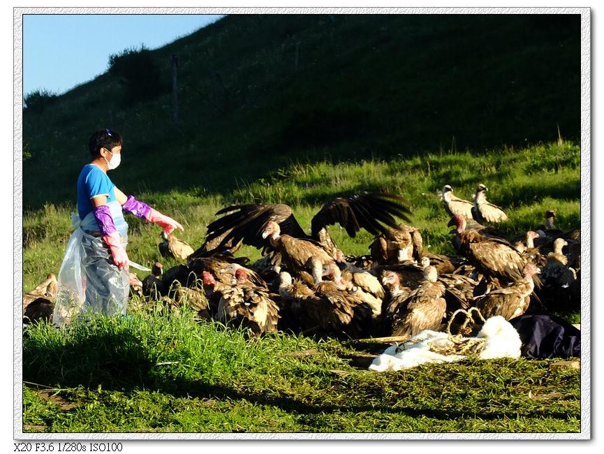 乖乖等吃的禿鷲們