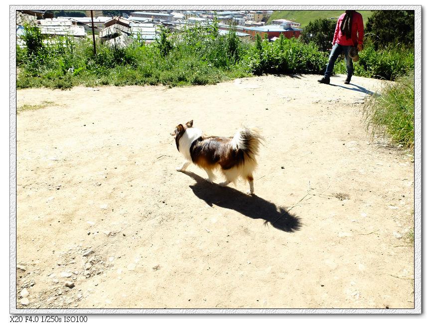 ......牧羊犬?