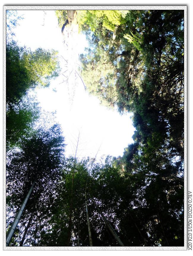 鳳凰山登山步道