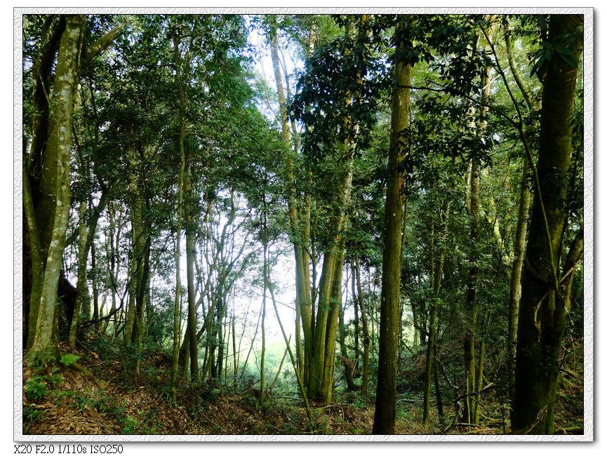 繼續穿過樹林