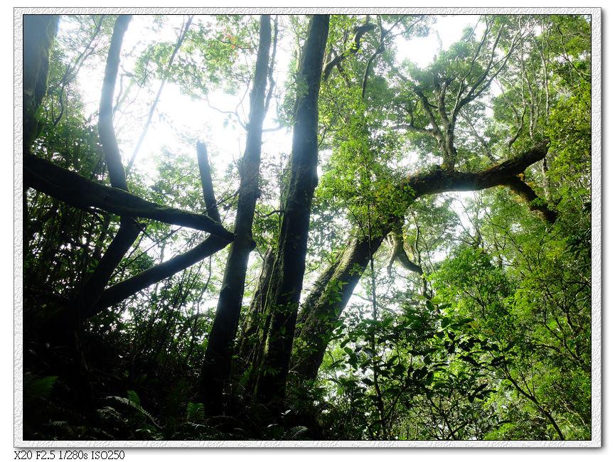 還是樹林間的上坡