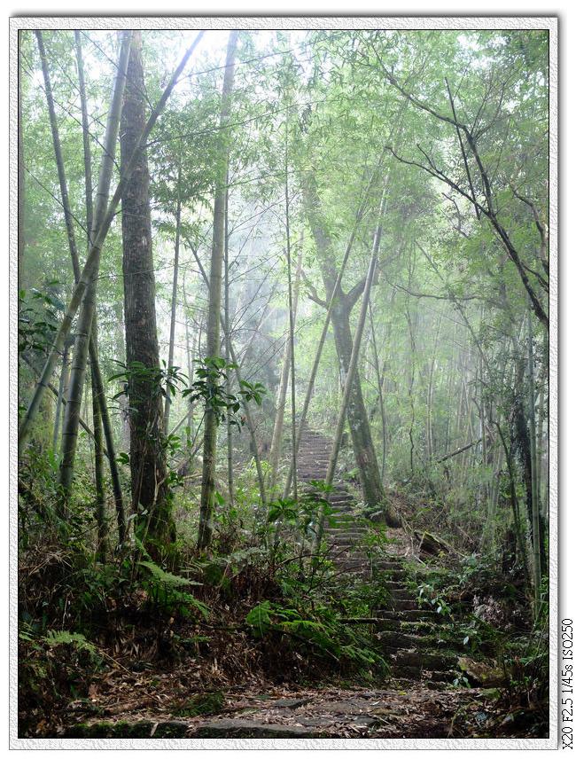 就算濃霧中我也看的到前方是上坡階梯...= =