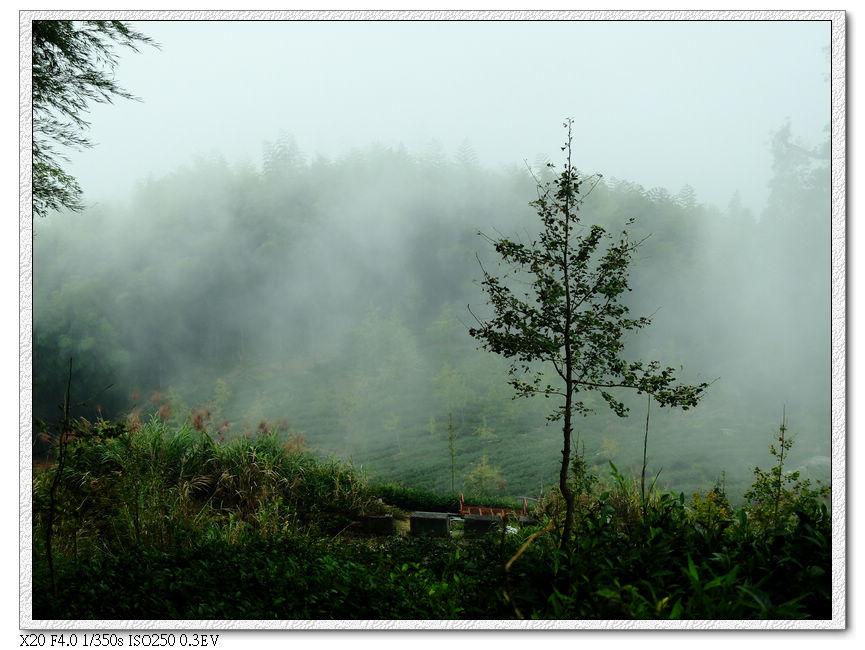 農霧中的茶園