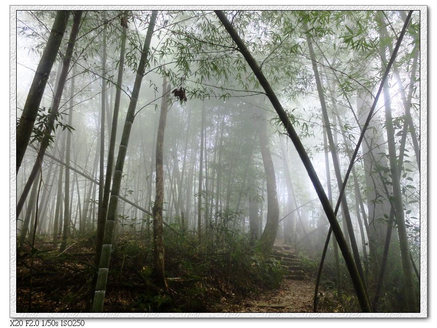 繼續霧中的樹林