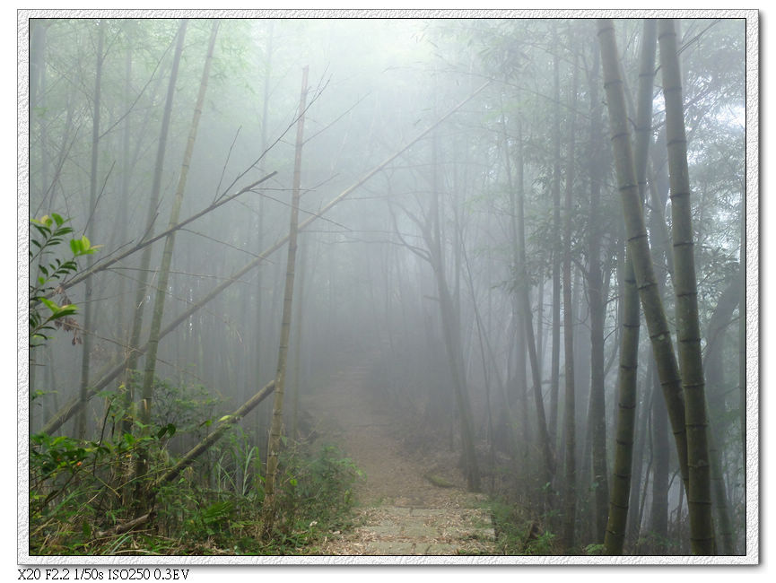 霧越來越濃