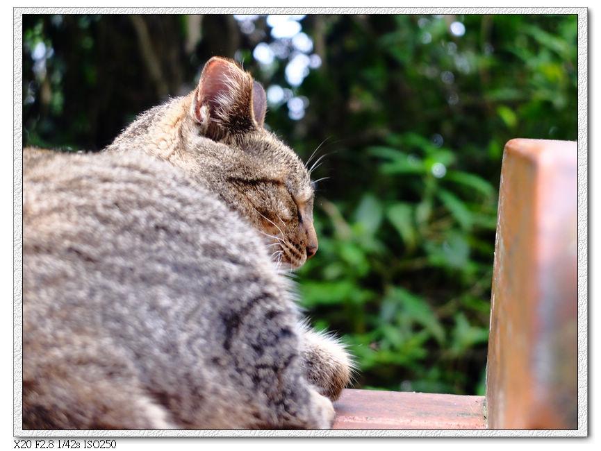 貓咪不理我