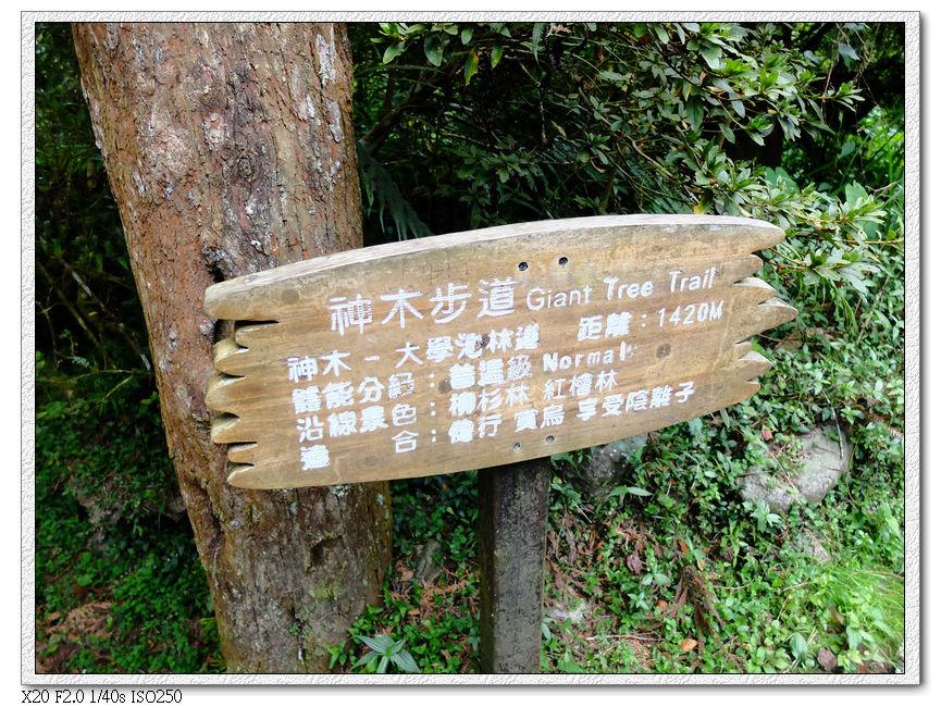 從神木步道走回出口