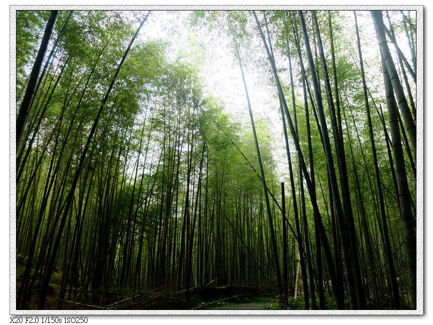 接近出口450m會變成竹林