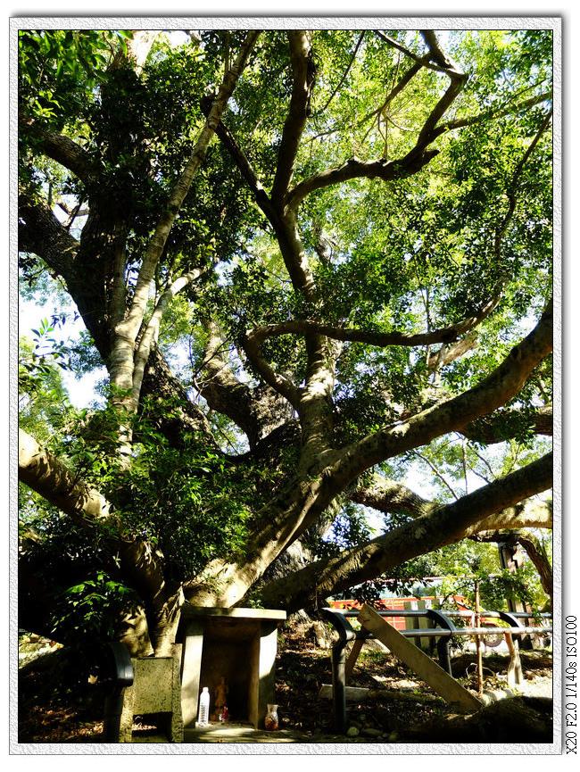 五福臨門神木下的小小土地公廟