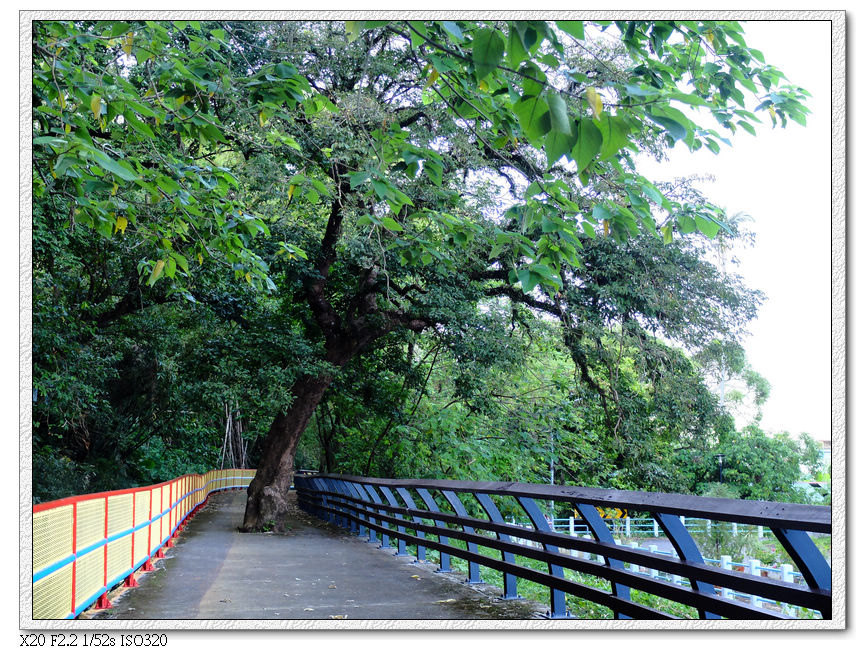 終點的步道中央樹木