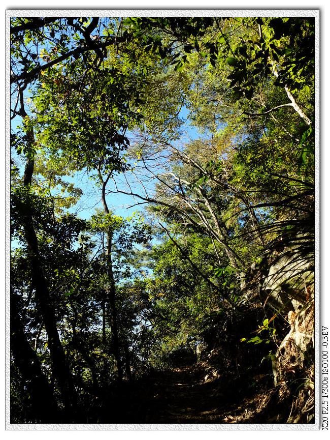 走出樹林看見藍天