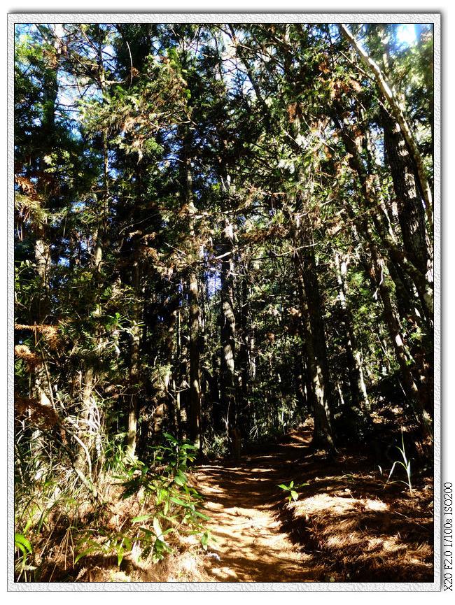樹林間的上坡