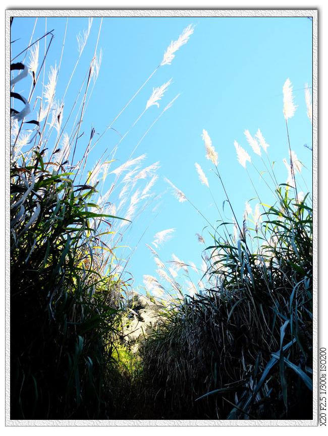 芒草堆中的上坡啊啊啊啊啊啊啊啊啊