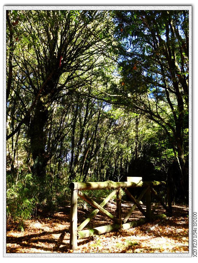 很多登山社團都會硬踩出一條捷徑,被踩出來的地方就草木不生,所以林務局設立這種柵欄禁止再踩那些捷徑