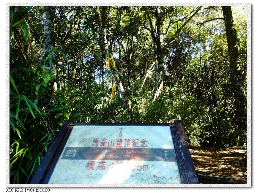 標高2305m的馬崙山,周圍都樹林,所以沒風景可看