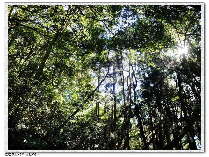 樹林間的下坡