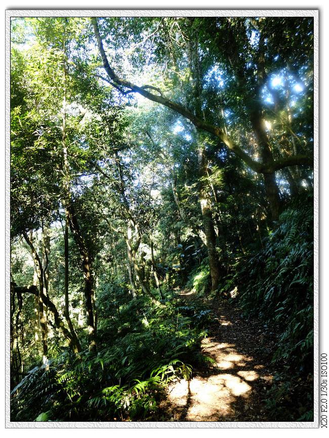 過一個果園的後門之後就全是陡下,走路要小心