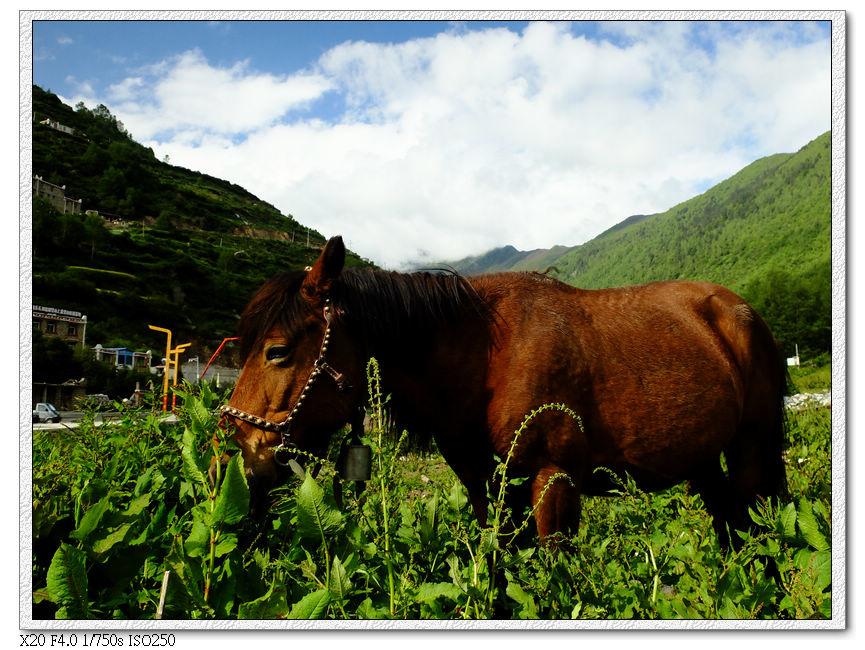 對面山坡看馬