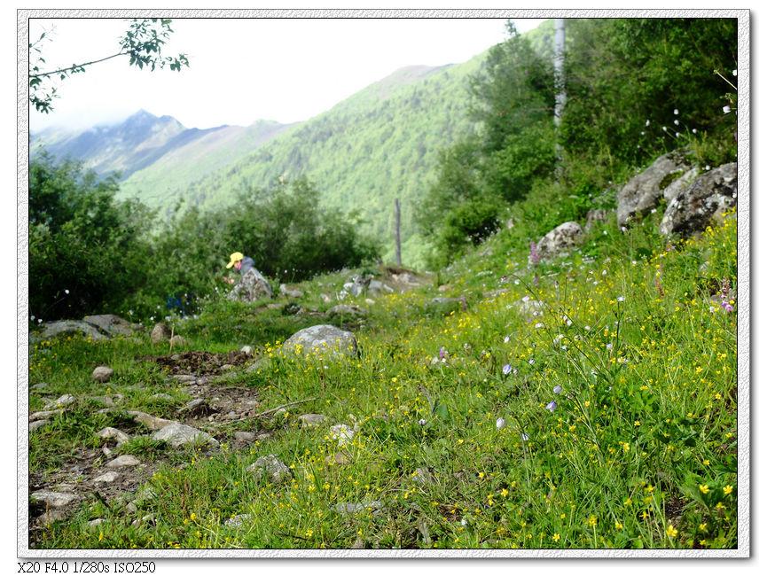 對面山坡的小花
