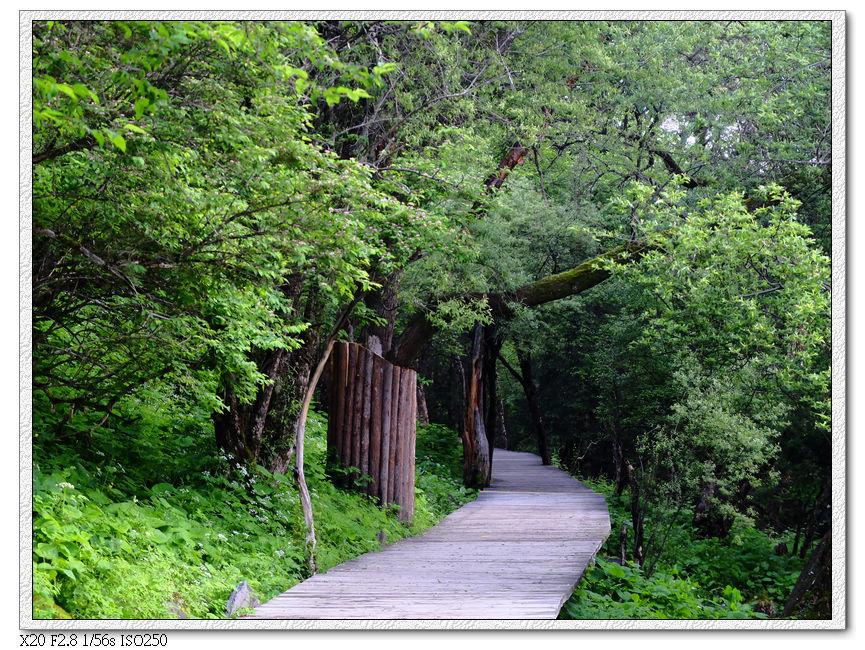 鋪設平整的木棧道
